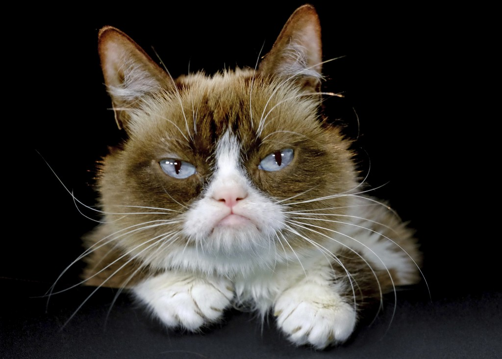 FILE - This Dec. 1, 2015 file photo shows Grumpy Cat posing for a photo in Los Angeles. Grumpy Cat, whose sour puss became an internet sensation, has