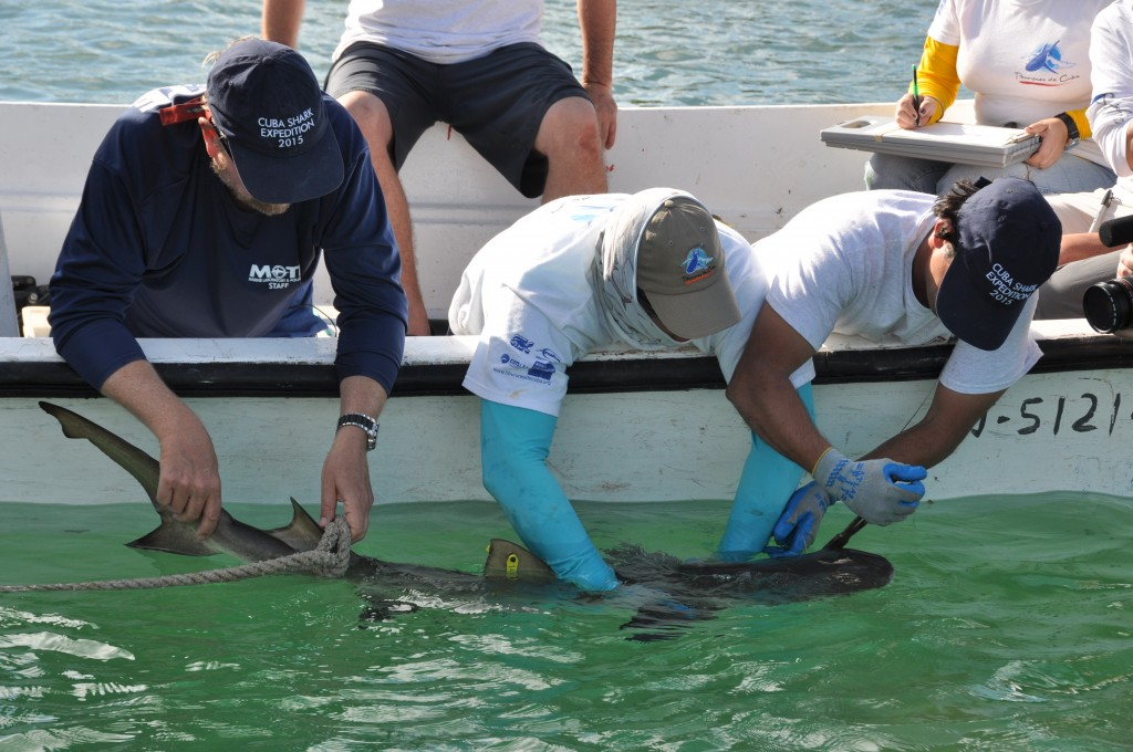 In this Feb. 10 2015 photo provided by the Environmental Defense Fund, U.S. scientist Dr. Robert Hueter, from left, and Cuban scientists Dr. Fabian Pi...