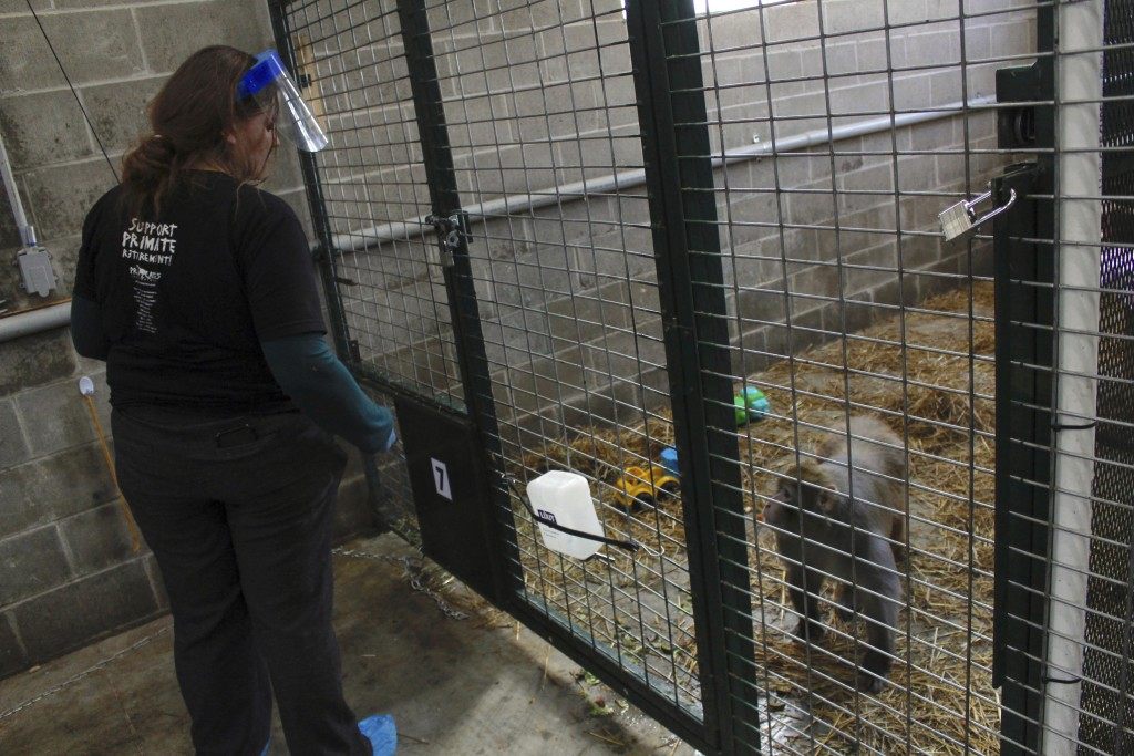 In this May 13, 2019, photo, Amy Kerwin feeds Mars at Primates Inc., in Westfield, Wis. Kerwin started the sanctuary, which took its first monkeys in