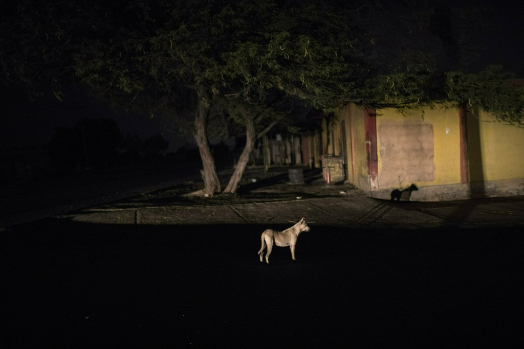 In this May 14, 2019 photo, a dog is illuminated by a car during a black out in Maracaibo, Venezuela. Venezuela holds the world's largest oil reserves