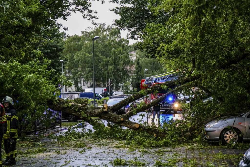 Fallen trees lie on a road after a heavy thunderst...