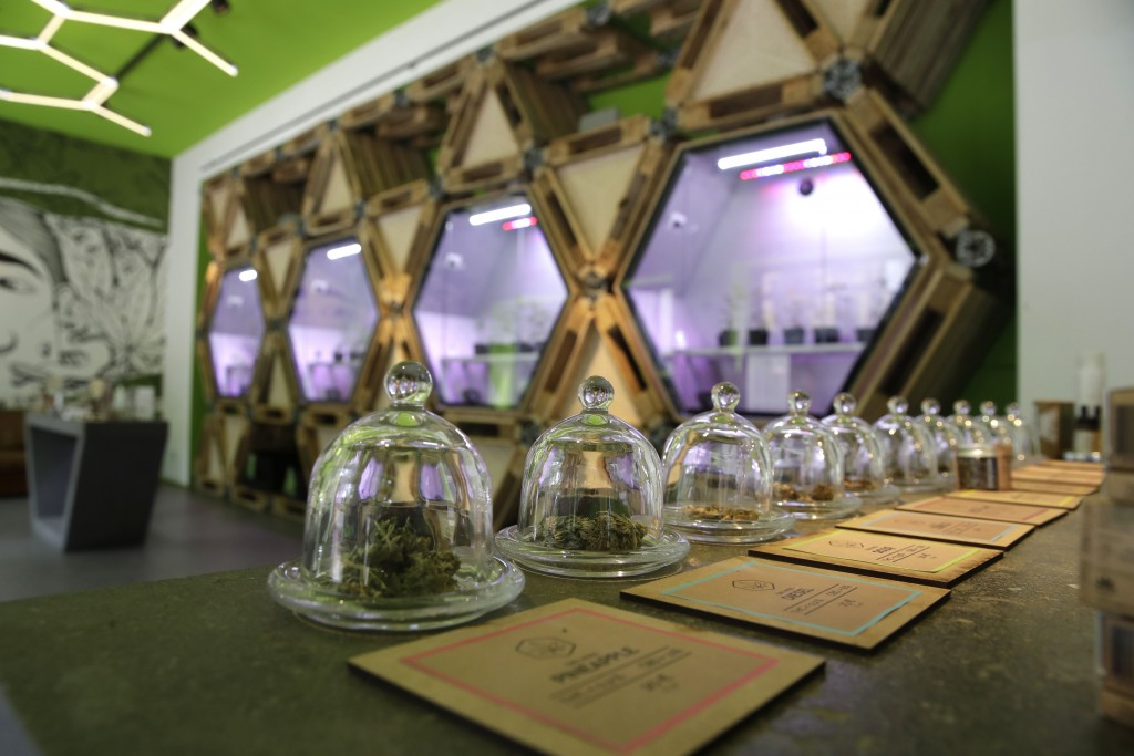 In this  Thursday, June 6, 2019 cannabis buds under a glass bell are displayed at a cannabis light store in Milan, Italy. Interior Minister Matteo Sal...