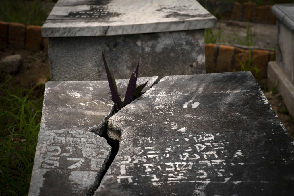 """A plant protrudes through the lid of a tomb at the Jewish cemetery in Guanabacoa, eastern Havana, Cuba, June 12, 2019. """"The people buried here escaped..."""