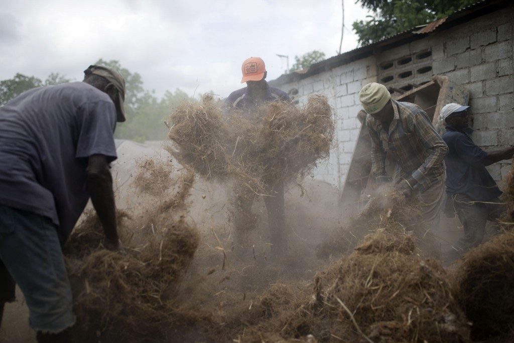 In this May 27, 2019 photo, workers prepare stringy roots culled from the vetiver plant, at a factory in Les Cayes, Haiti. The men gather the roots to