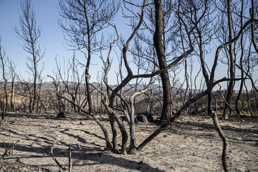 Burned trees remain after a fire in La Palma d'Ebre, Spain, Friday June 28, 2019. A major wildfire in northeastern Spain that began in a pile of chick...