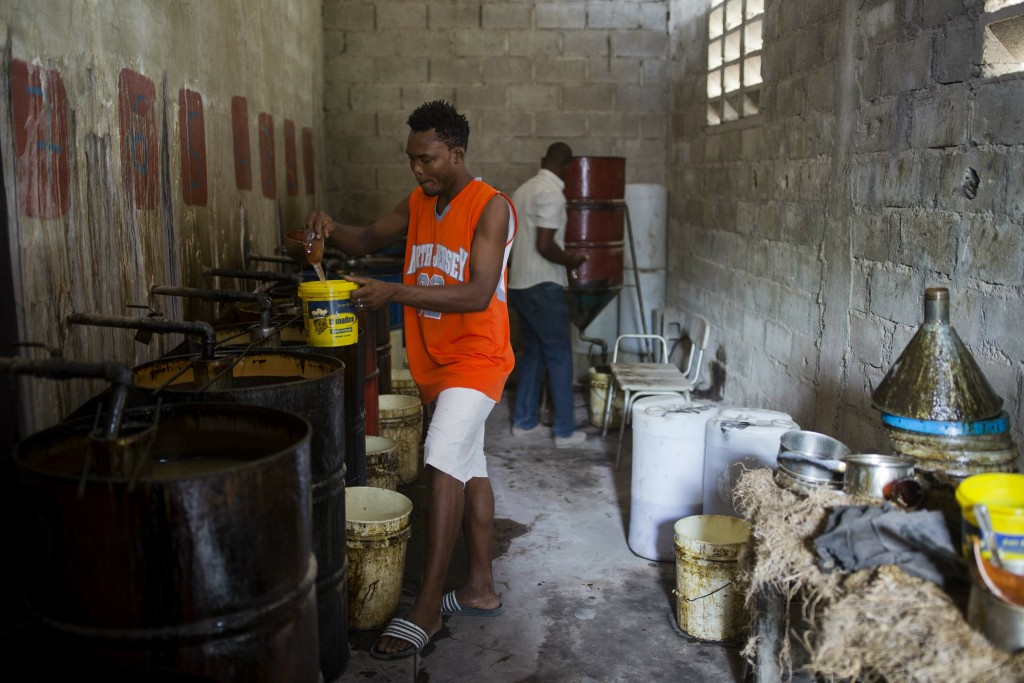 In this May 27, 2019 photo, Alsonce Jeune 32, extracts vetiver oil, used in fine perfumes, in Les Cayes, Haiti. Before the oil can be bought by top pe...