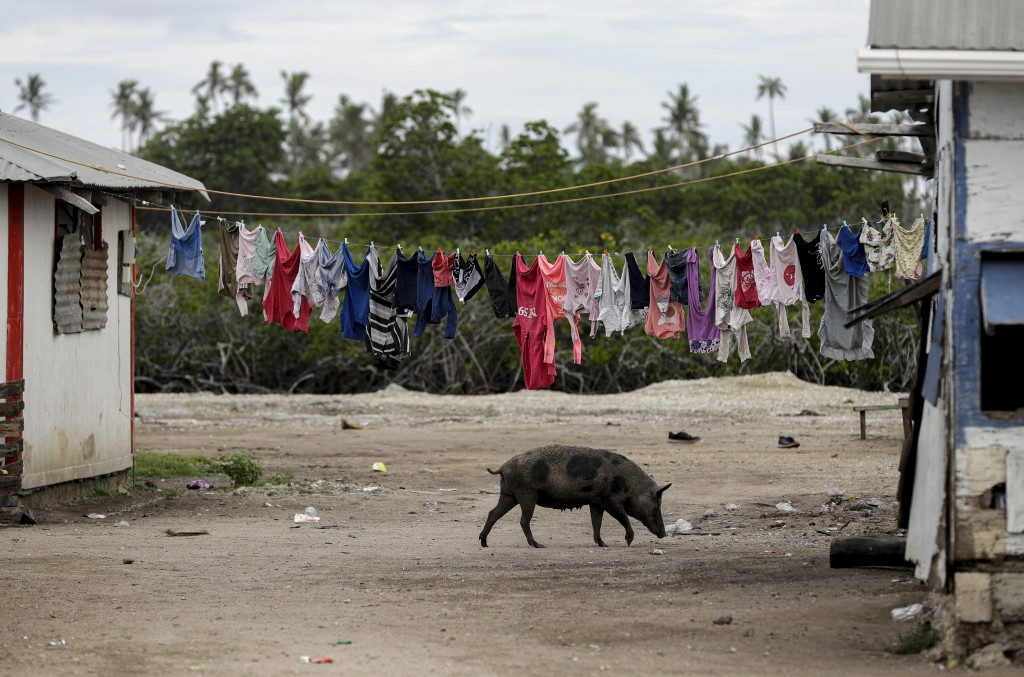 In this April 7, 2019, photo, a pig walks outside a house in Nuku'alofa, Tonga. China is pouring billions of dollars in aid and low-interest loans int