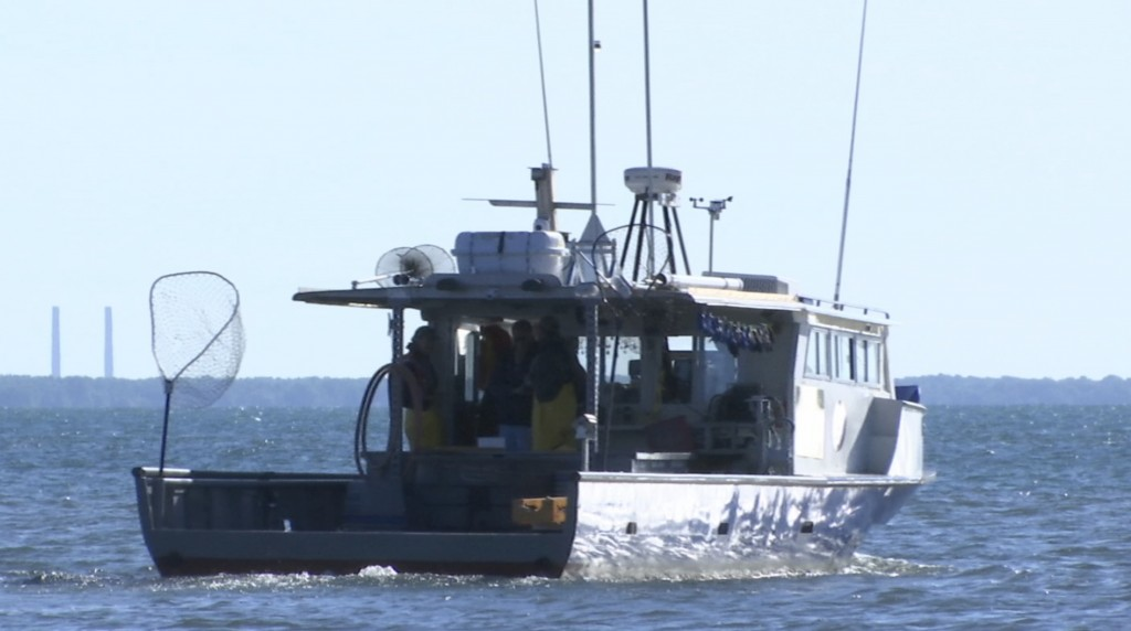 In this Friday, June 14, 2019, image made from video, a research vessel ships off on a sturgeon surveying expedition in Harrison Township, Mich. The a