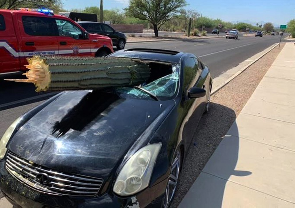 This photo provided by the Northwest Fire District shows where a driver escaped injury when his car's windshield was pierced by the trunk of a saguaro