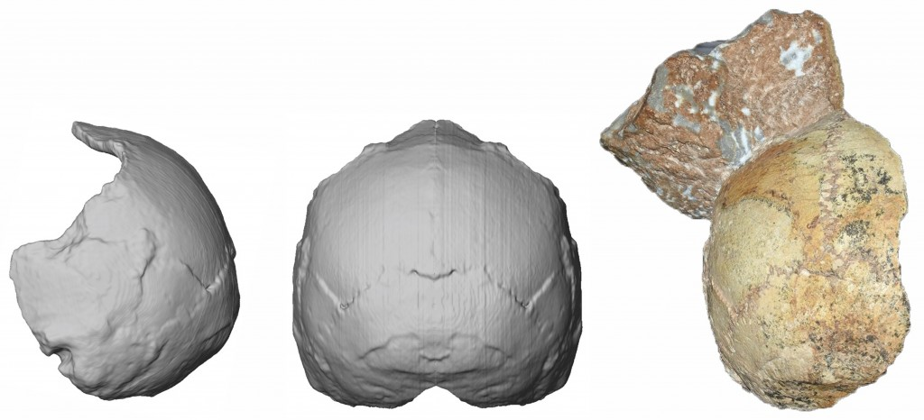 This image provided by the University of Tuebingen in Germany shows the Apidima 1 partial cranium fossil, right, with a piece of rock still attached,