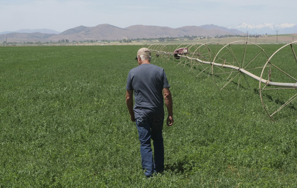 In this Wednesday, June 26, 2019, photo, Russell Jones walks in his alfalfa field on his farm, in Nephi, Utah. The Joneses are fourth-generation farme...