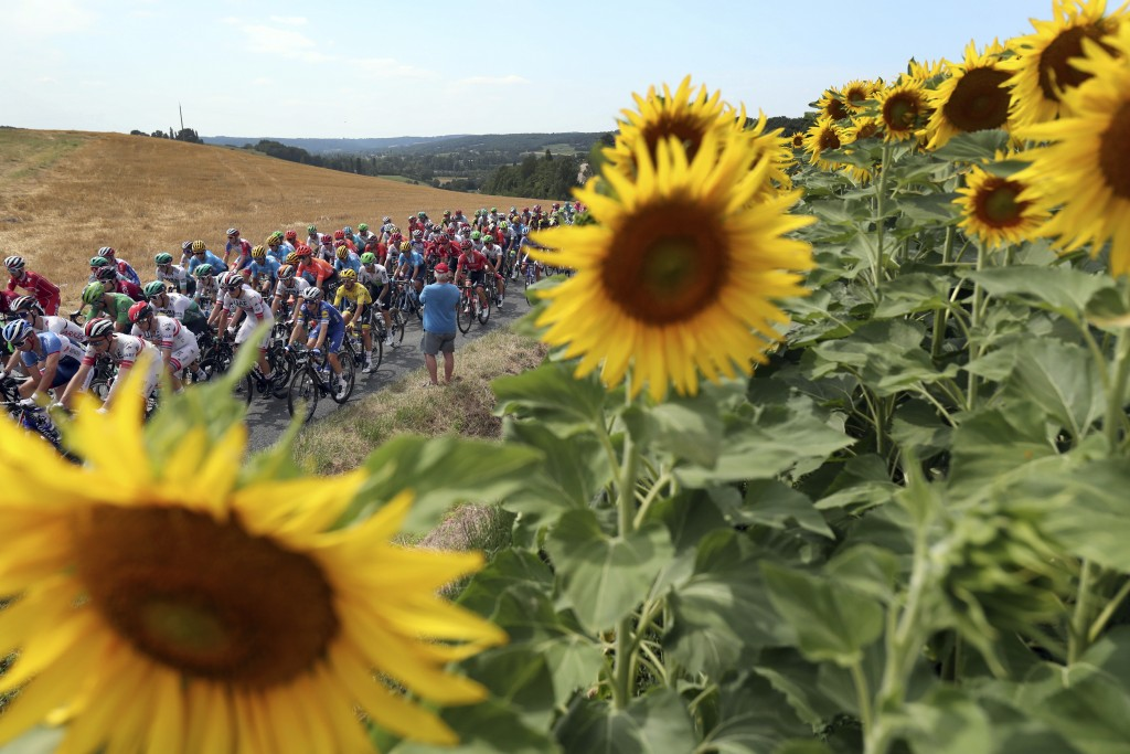 FILE - In this Wednesday, July 17, 2019 file photo the pack rides past a sunflowers fields during the eleventh stage of the Tour de France cycling rac...