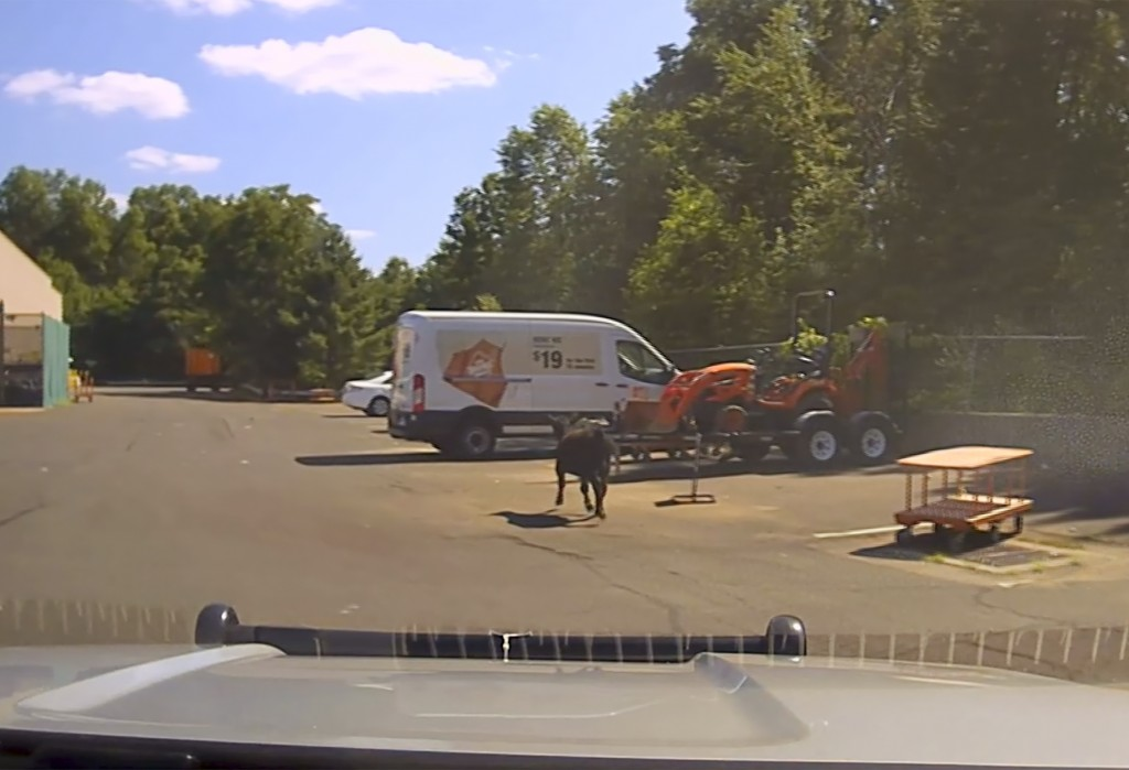 FILE - This July 13, 2019 frame grab from a police dashcam video, shows a cow who escaped a nearby slaughterhouse moving through a Home Depot parking ...