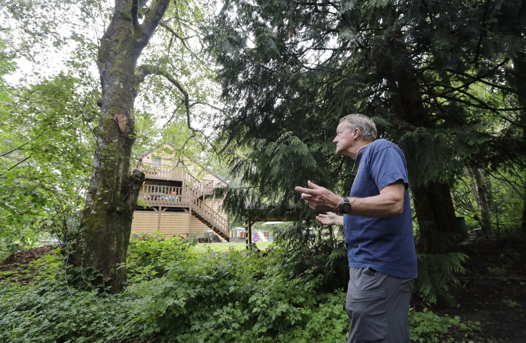 In this photo taken Friday, Aug. 2, 2019, Wayne Elson looks up at a dead tree that he says he needs to cut down, as it could fall and block the road i...