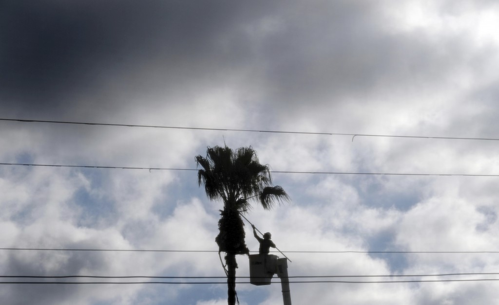 FILE - In this Dec. 27, 2018, file photo a worker trims fronds from a palm tree in the Los Feliz section of Los Angeles. On Monday, Aug. 5, 2019, the ...
