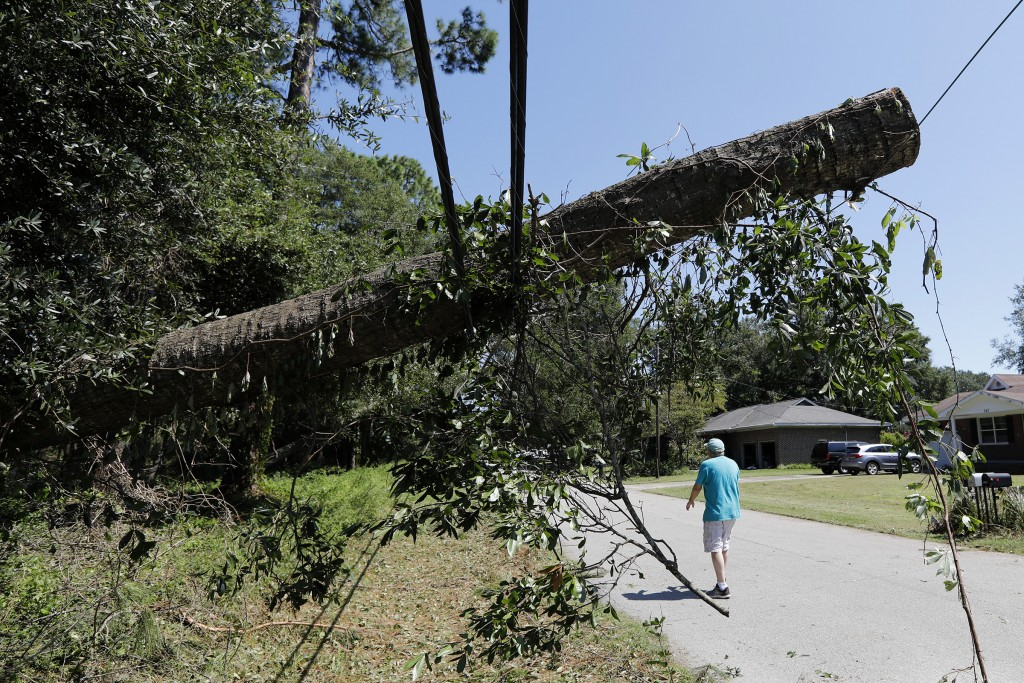 A tree brings down power and cable lines after Hurricane Dorian passed by James Island, S.C., Friday, Sept. 6, 2019. (AP Photo/Mic Smith)