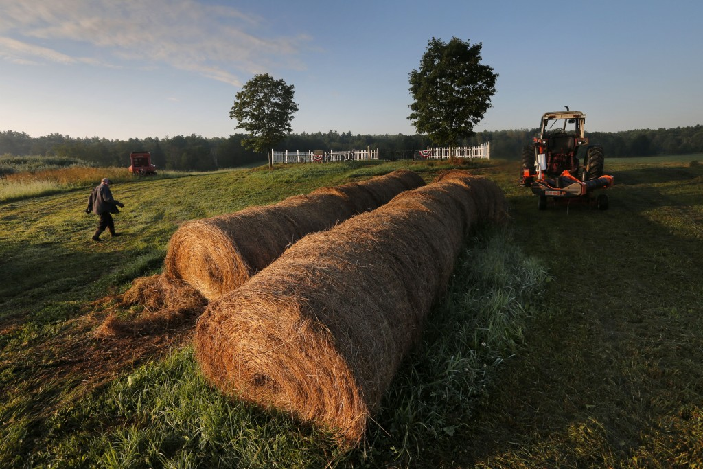 In this Thursday Aug. 15, 2019 photo, dairy farmer Fred Stone walks to his baling machine at his dairy farm in Arundel, Maine. (AP Photo/Robert F. Buk...