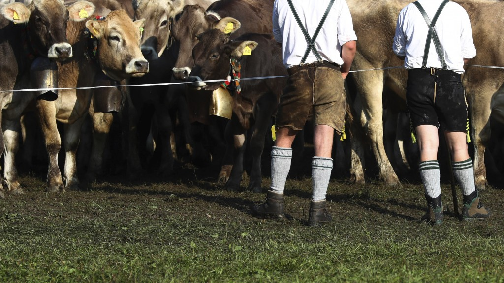 Bavarian herdsmen rest as they drive the beasts during the return of the cattle from the summer pastures in the mountains near Bad Hindelang, Germany,