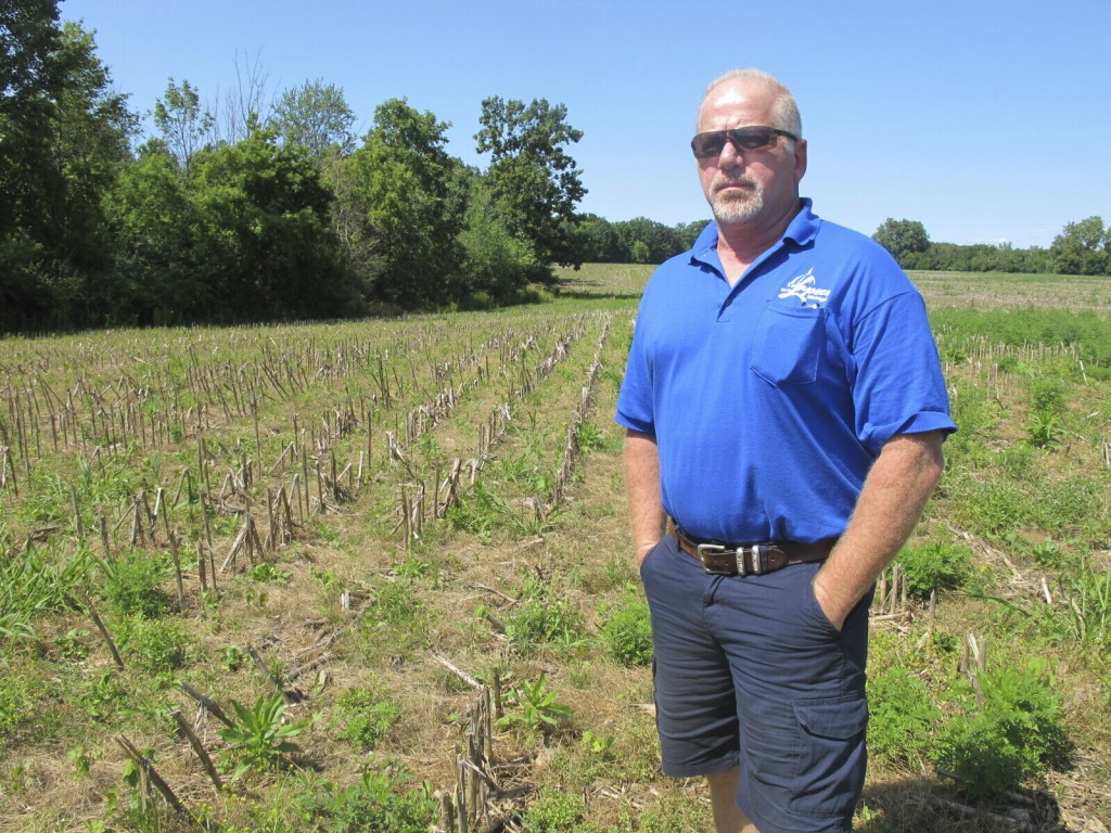 In this July 31, 2019 photo, Michael Wurts, superintendent of the Lapeer Wastewater Treatment Plant, stands in an adjacent cornfield where sludge from...