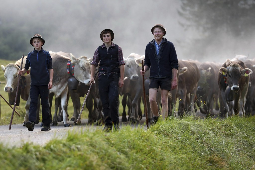 Bavarian herdsmen drive their beasts on a road during the return of the cattle from the summer pastures in the mountains near Bad Hindelang, Germany,