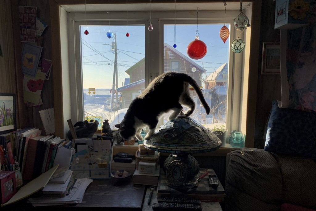 In this Feb. 18, 2019, photo, a cat hops off a table lamp inside a home in Nome, Alaska. Most residents here live in single story homes built on the p...