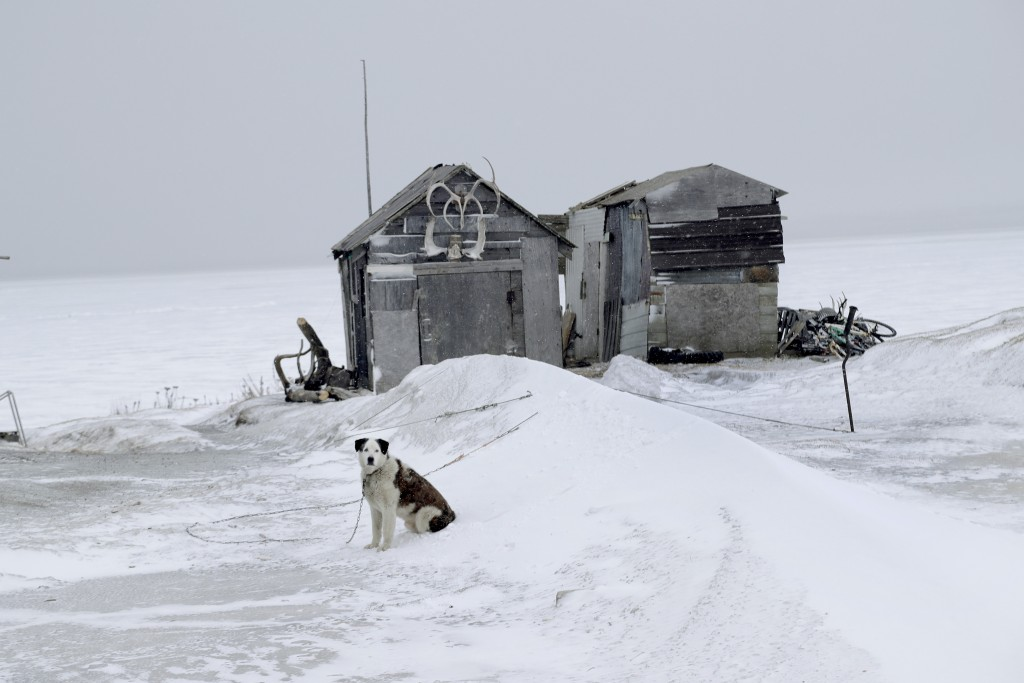 In this Feb. 18, 2019, photo, a dog sits outside a fish drying shed in the Native Village of St. Michael, Alaska. According to a list released in 2018...