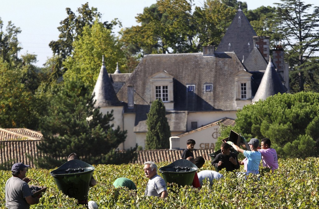 FILE - This Monday, Oct. 7 , 2013, file photo shows workers collecting red grapes in the vineyards of the famed Chateau Haut Brion, a Premier Grand Cr
