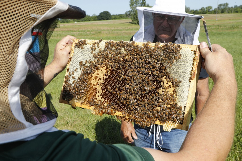 In this July 11, 2019 photo, Frank Bartel, a 69-year-old resident of Gregory, Mich., looks at some bees at the Henry Ford farm in Superior Township, M...