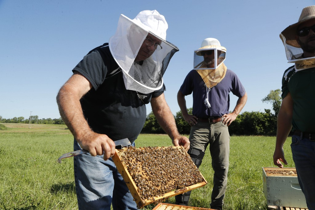In this July 11, 2019 photo, Frank Bartel, a 69-year-old resident of Gregory, Mich., looks at a hive of bees in Superior Township, Mich. He served in ...