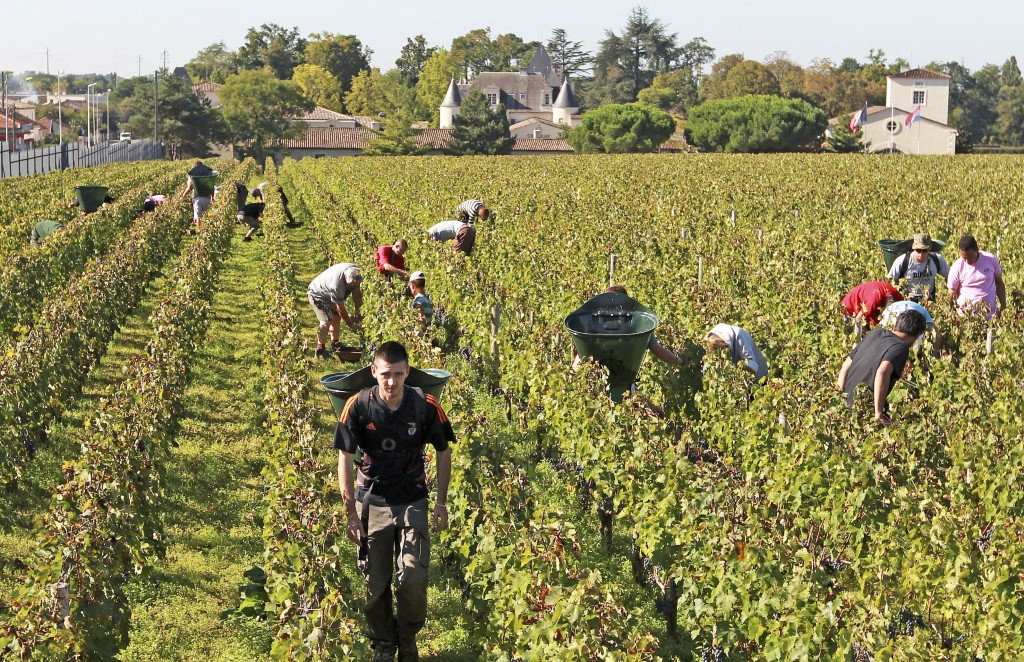 FILE - This Oct. 7, 2013 file photo shows workers collecting red grapes in the vineyards of the famed Chateau Haut Brion, a Premier Grand Cru des Grav...