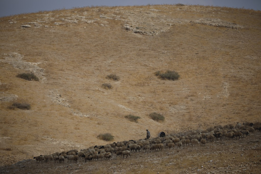 A Palestinian shepherd tends to his flock of sheep, near Bardala, in the Israeli-occupied West Bank, Wednesday, Sept. 11, 2019. Israeli Prime Minister...