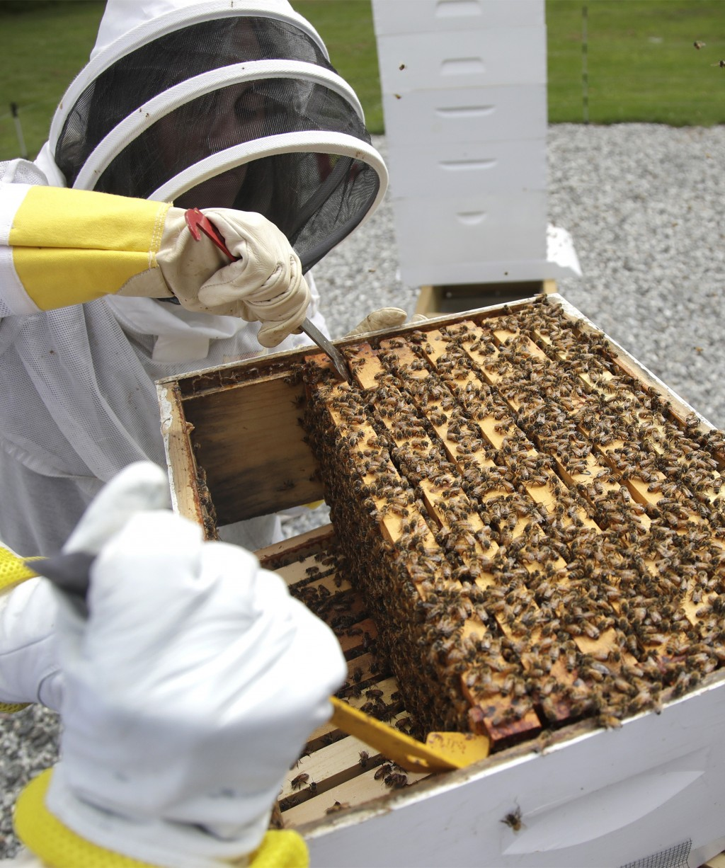 In this Aug. 7, 2019 photo, U.S. Army veteran Wendi Zimmermann uses a tool to slide up a frame of bees to check them for disease and food supply at th