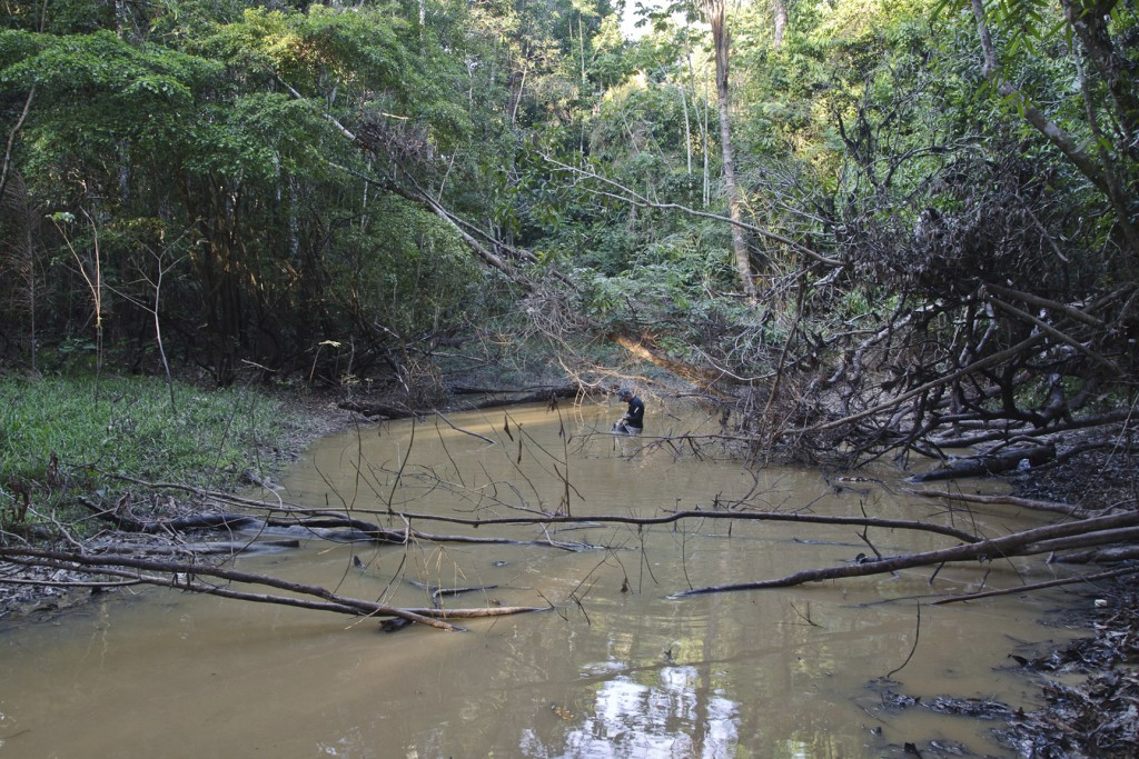This undated photo provided by researchers in September 2019 shows typical electric eel lowland habitat in Brazil's Itaquai River. A newly discovered ...