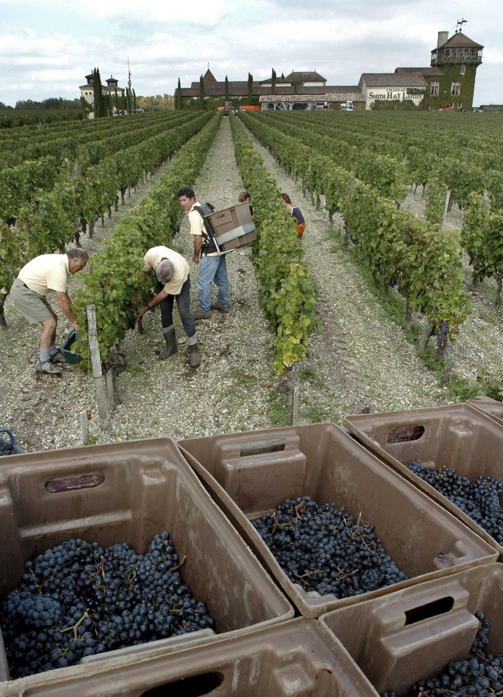 FILE - In this Sept.24, 2004 file photo, grape-pickers harvest grapes at the Chateau Smith Haut Lafitte, near Bordeaux, southwestern France, in the Gr...