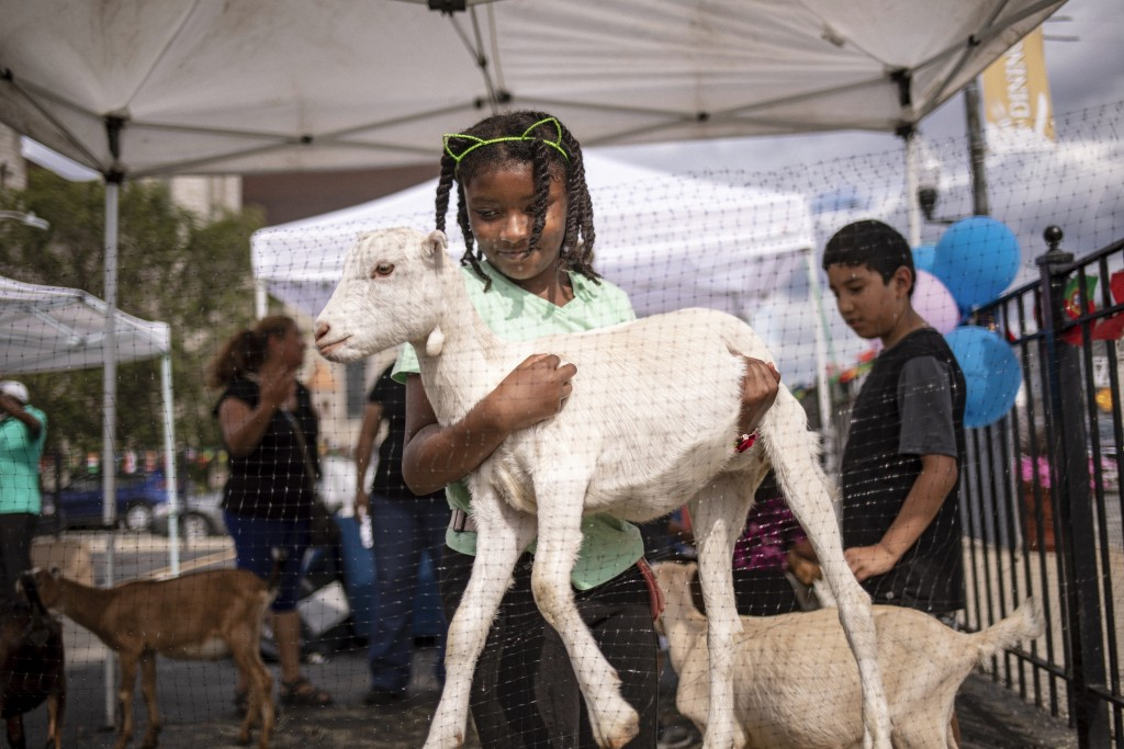 In this Friday, Aug. 16, 2019, photo, a girl carries a goat at the Inner-city Muslim Action Network's (IMAN) farmers market in Chicago in Chicago in C...