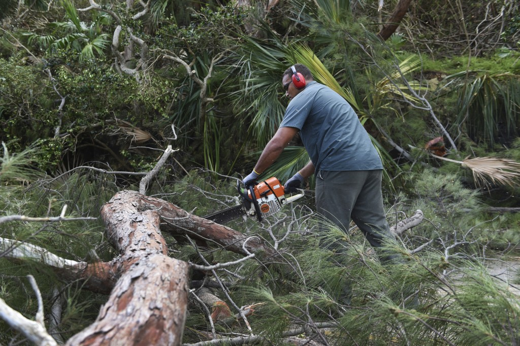 A man uses a powered saw to cut away a felled tree blocking Harrington Sound Road in the aftermath of Hurricane Humberto, in the Smiths parish of Berm