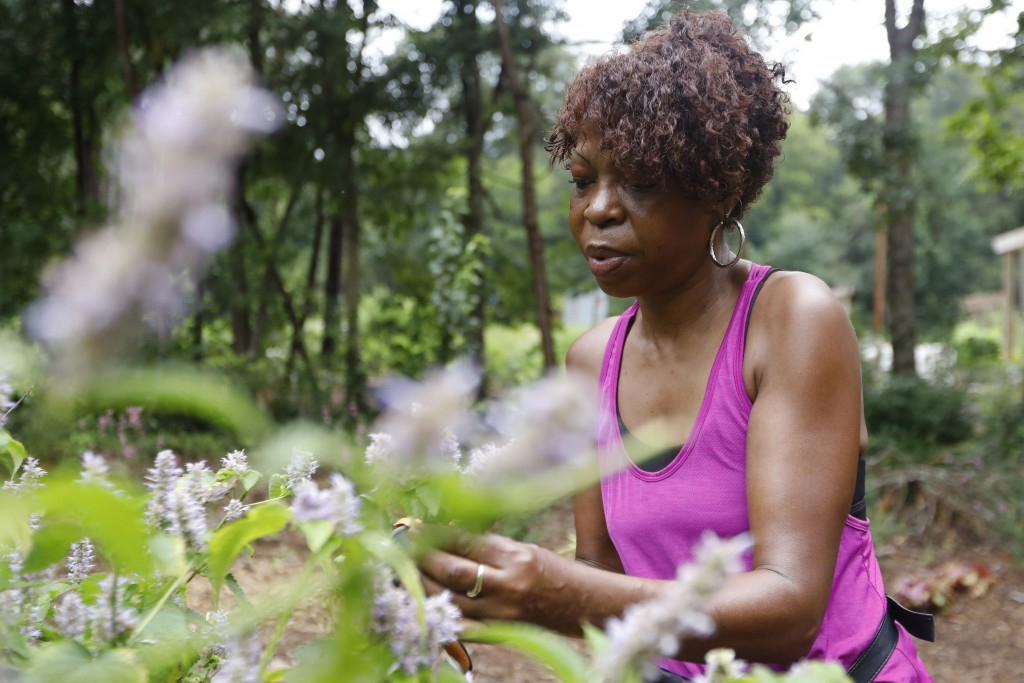 In this Friday, July 19, 2019 photo, Celeste Lomax harvests anise hyssop plants in a community garden at the Urban Food Forest at Browns Mill in Atlan...