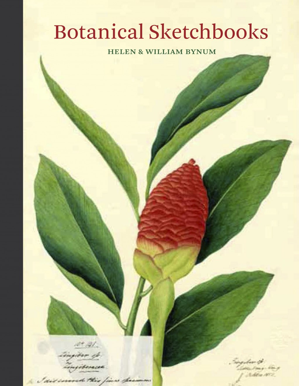 """This photo provided by Princeton Architectural Press shows the cover of the book """"Botanical Sketchbooks"""" by Helen & William Bynum. Highly detailed bot..."""