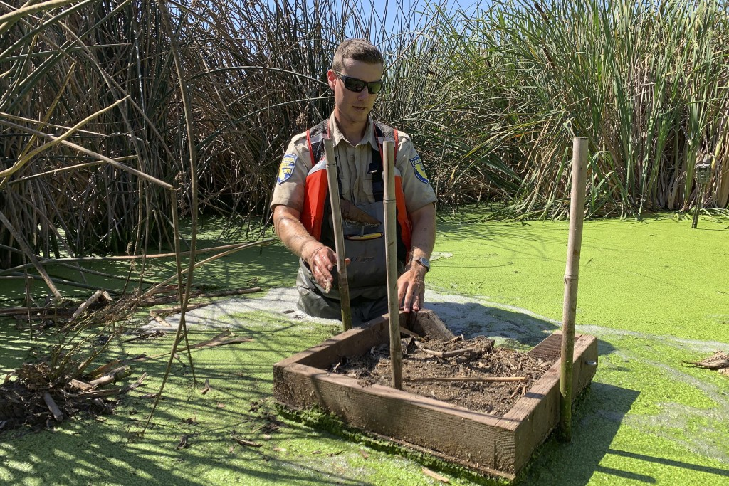 In this photo taken Sept. 12, 2019, Sean McCain, a scientist with the California Department of Fish and Wildlife, sets up a feeding platform used to l...