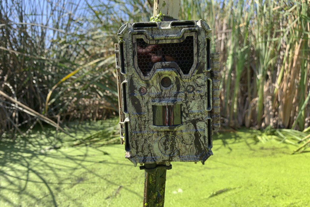 This photo taken Sept. 12, 2019, shows a surveillance camera used to take photos and video of nutria in a pond in Stevinson, Calif. With $10 million i