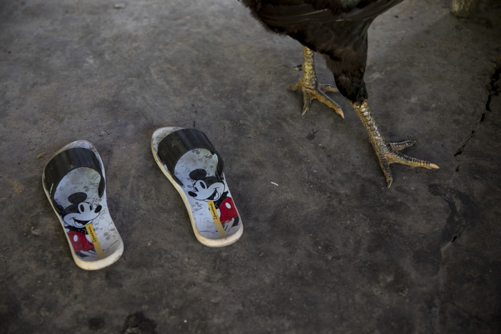 In this Sept. 2, 2019 photo, a chicken walks past a pair of Mickey Mouse flip flops, in the Ka 'a kyr village, Para state, Brazil. Daily life in the r...
