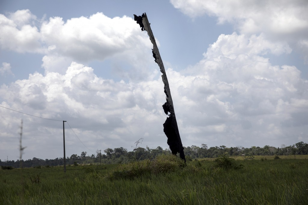 This Sept. 2, 2019 photo shows the remains of a charred tree in the middle of a farming area in the Ka 'a kyr village, Para state, Brazil. Concern abo...