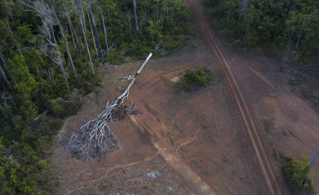 "This Sept. 2, 2019 photo shows a cut tree that was felled by a fire in a deforested area near the village Ka 'a kyr, in Para state, Brazil. ""We have t..."