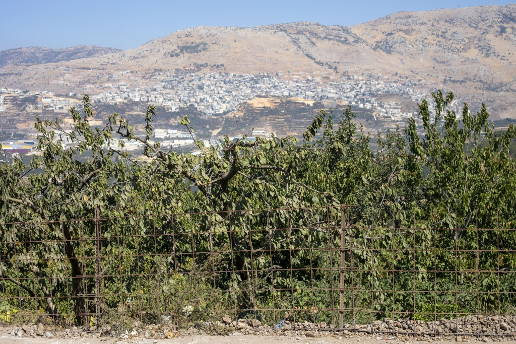 In this Sept. 10 2019 photo, apple trees gro on Druze farmland in the Israeli-controlled Golan Heights, near the border with Syria. Towering wind turb...