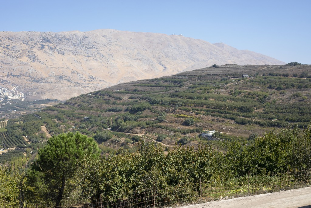 In this Sept. 10 2019 photo, apple trees grow on Druze farmland in the Israeli-controlled Golan Heights, near the border with Syria. Towering wind tur...