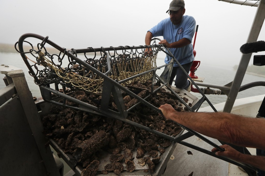 In this March 11, 2019, photo, Robert Campo, an oyster fisherman and marina owner, pulls in material from what used to be a thriving oyster bed in Ysc...