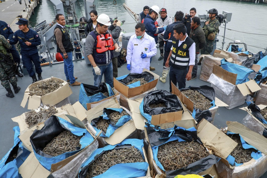 In this Sept. 30, 2019 photo provided by the Peruvian Production Ministry, authorities stands next to a shipment of seized dried seahorses in Callao,