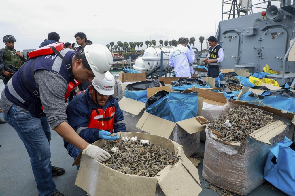 In this Sept. 30, 2019 photo provided by the Peruvian Production Ministry, authorities inspect a shipment of seized dried seahorses in Callao, Peru. A