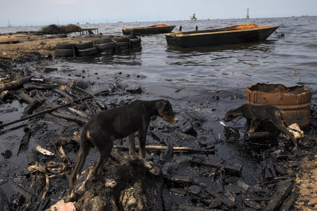 Dogs search for scraps of fish left behind by fishermen on the shore of Lake Maracaibo blacked by oil, near La Salina crude oil shipping terminal in C...