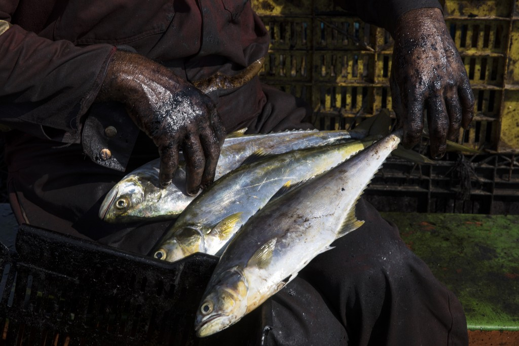 """The hands of fisherman Edward Alexander Barrios are covered in oil as he organizes bass, known as """"robalo,"""" that he caught in Lake Maracaibo as he ret..."""